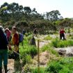 Wednesday Walkers planting at Wattle Point 2012.